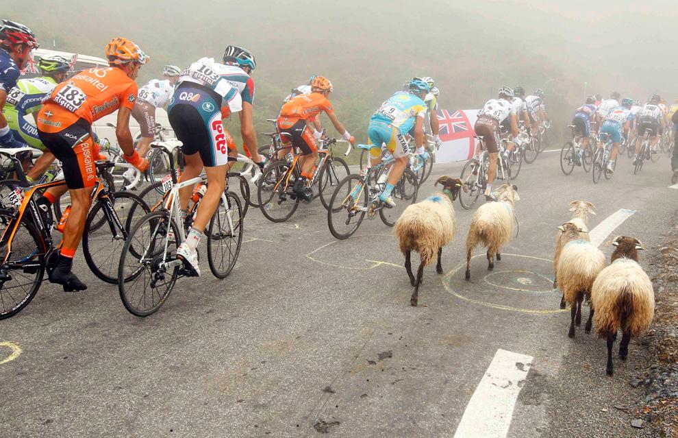 pecore-al-tour